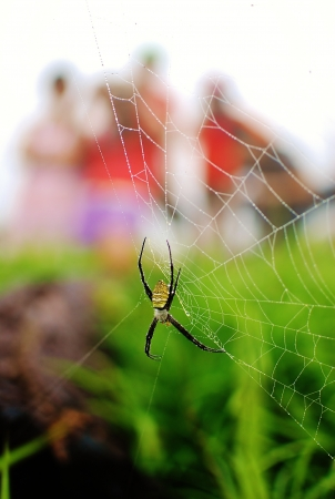 Spider web with people in background