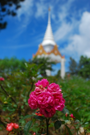 Pink flower in front of thai pagoda at Phu Rua National Park, loei, Thailand