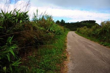 Road to the top of Phu rua mountain at Phu Rua National Park, loei, Thailand