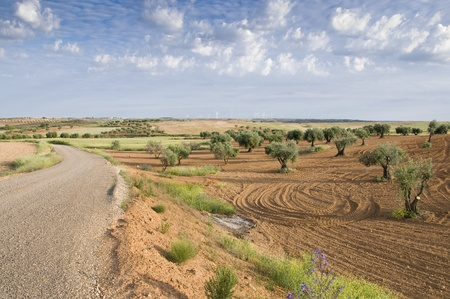 Rural road in an ararian landscape (Toledo, Spain)