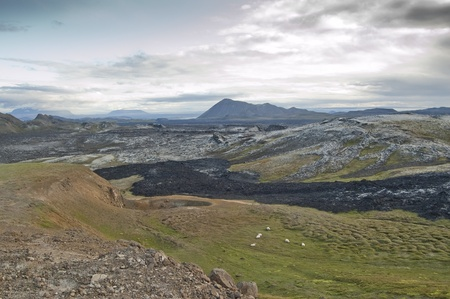 Sheep next to lava field in Iceland (Leirhnjukur) Stock Photo - 11596400