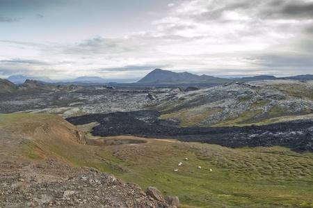 Sheep next to lava field in Iceland (Leirhnjukur) Stock Photo - 11596400