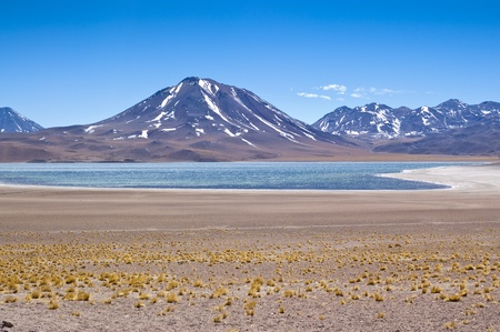 brackish water: Views of Miscanti Lagoon, Chile