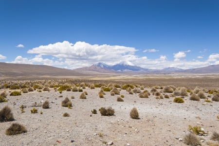 Parinacota and Pomerape volcanos (Lauca National Park, Chile) photo