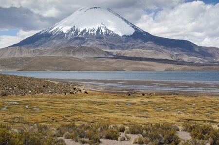 Chungará Lake and Parinacota volcano, Lauca National Park, Chile Stock Photo