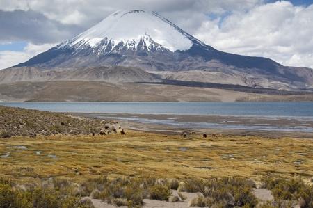 Chungará Lake and Parinacota volcano, Lauca National Park, Chile Stock Photo