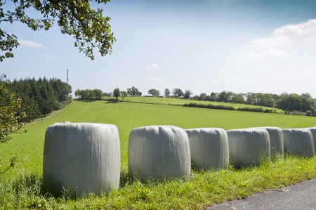 Bales of silage. Silage is fermented fodder that can be fed to rumiants.