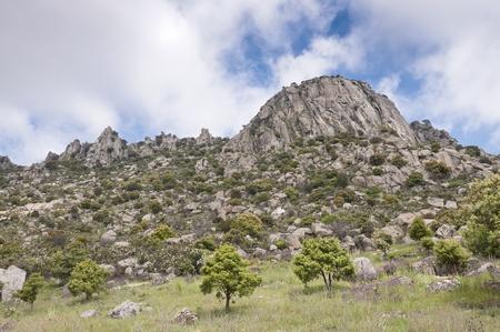 rocky mountain juniper: Pico de la Miel  Honey Peak   It is a granite batholith located at  Sierra de la Cabrera, Madrid, Spain