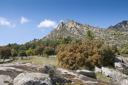 steep holm: Mountain landscape at Sierra de la Cabrera, Madrid, Spain  It is a granite batholith where geologic forces have created a boulder field of eroded franitic outcrops