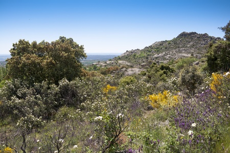 Springtime at mediterranean mountain, Sierra de la Cabrera, Madrid, Spain