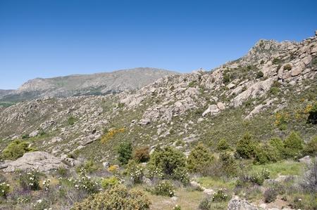 rocky mountain juniper: Mountain landscape in Guadarrama Mountains, Madrid, Spain