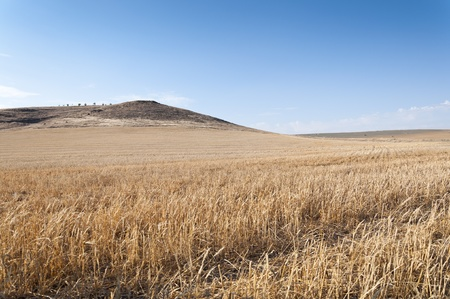 agrarian: Harvested barley field in an agrarian landscape in Ciudad Real Province, Spain