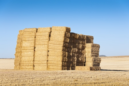 agrarian: Bale of hay in an agrarian landscape in Ciudad Real Province, Spain Stock Photo
