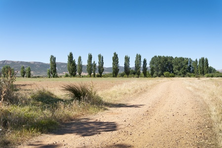 Dirt road to poplar grove in an agrarian landscape in Ciudad Real Province, Spain Stock Photo - 12474524