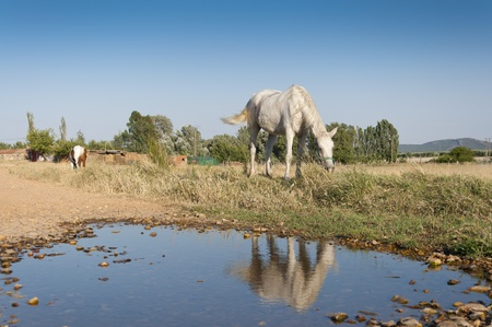 Two horses grazing in a rural landscape in Ciudad Real Province, Spain photo
