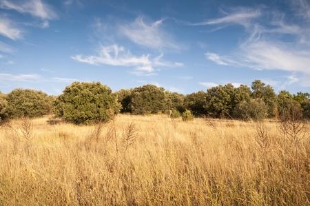 mediterranean forest: Mediterranean forest at autumn