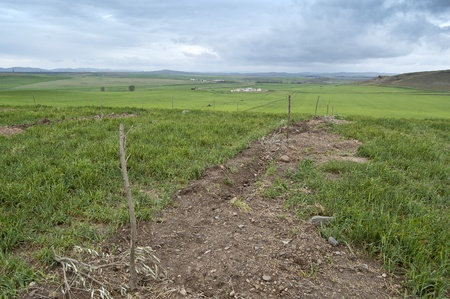 Newly planted young olive trees in an agricultural landscape in Ciudad Real Province, Spain photo