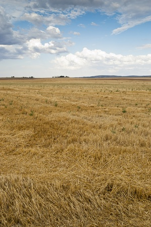 Stubble field in an agricultural landscape in Ciudad Real Province, Spain Stock Photo