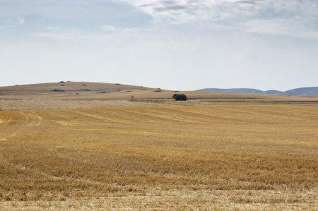 Stubble field in an agricultural landscape in Ciudad Real Province, Spain  photo