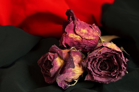 Withered roses on red and black clothes photo