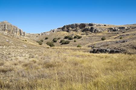 "rocky mountain juniper: Moors of the ""Hoces del Rio Duraton"" Natural Park, Segovia Province, Spain  At the background are several specimens of Juniper  Juniperus thurifera  Stock Photo"