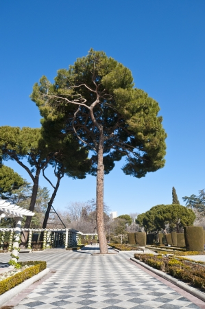 Pine tree and pergolas in Cecilio Rodriguez Gardens, Retiro Park, Madrid, Spain Stock Photo - 15091218