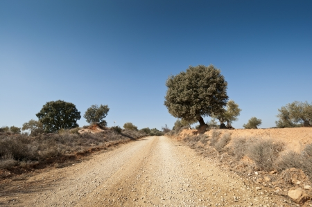 Country road in an agricultural landscape  Photo taken in Brea de Tajo, Madrid Province, Spain