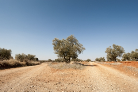 Country road in an agricultural landscape  Photo taken in Brea de Tajo, Madrid Province, Spain  photo