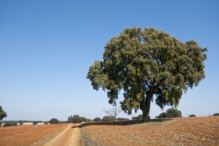 brea: Country road in an agricultural landscape  Photo taken in Brea de Tajo, Madrid Province, Spain