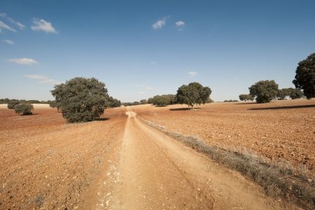 fagaceae: Country road in an agricultural landscape  Photo taken in Brea de Tajo, Madrid Province, Spain