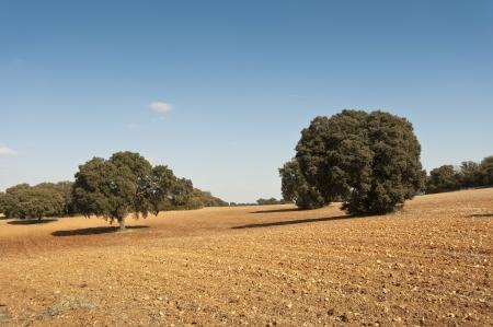brea: Dehesa in an agricultural landscape  Photo taken in Brea de Tajo, Madrid Province, Spain  Stock Photo