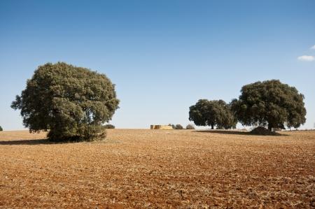 brea: Dehesa in an agricultural landscape  taken in Brea de Tajo, Madrid Province, Spain