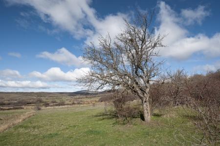 millan: Bare tree on winter  Picture taken in San Millan de Lara, Burgos Province, Spain