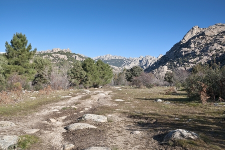 scots pine: Views of La Pedriza, Madrid, Spain  It is a granite mountain where geological forces have create a remarkable boulder field of strangely eroded granite outcrops   Stock Photo