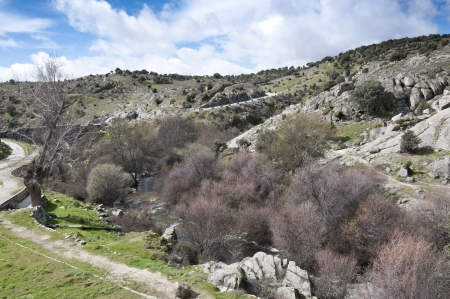 Riparian forest along the river Manzanares, Colmenar Viejo, Madrid, Spain  This river has had a great historical importance due to its close relation to the city of Madrid  photo