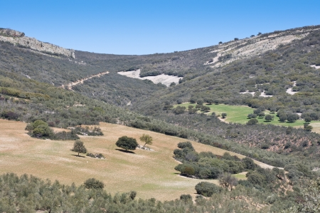 quartzite: Mediterranean forest over quartzite mountains  Photo taken in Montes de Toledo, Ciudad Real Province, Spain  The Montes de Toledo are located in the central regions of the Iberian Peninsula, cutting transversally from east to west across the lower portion Stock Photo