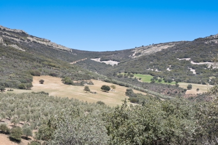 scrub grass: Mediterranean forest over quartzite mountains  Photo taken in Montes de Toledo, Ciudad Real Province, Spain  The Montes de Toledo are located in the central regions of the Iberian Peninsula, cutting transversally from east to west across the lower portion Stock Photo