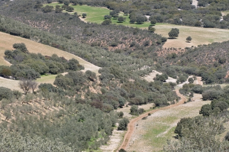 Olive groves in a mosaic landscape  Photo taken in Ciudad Real Province, Spain  photo