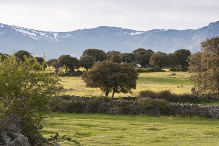 viejo: Commonages pastures in Dehesa de Navalvillar, Colmenar Viejo, Madrid, Spain