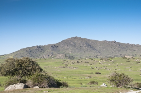 viejo: Commonages pastures in Dehesa de Navalvillar, Colmenar Viejo, Madrid, Spain. At the background, the Cerro de San Pedro, San Pedro Peak