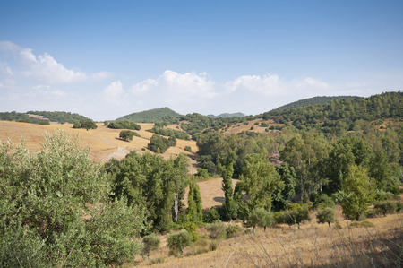 scrub grass: Views of Andalusian countryside from El Bosque town, Cadiz, Spain