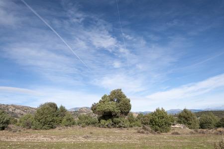 Holm Oak and Juniper dehesa in Guadarrama Mountains, Madrid, Spain