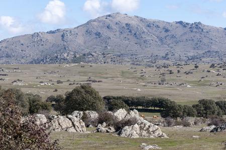 san pedro: Holm Oak and Juniper dehesa in Guadarrama Mountains, Madrid, Spain. At the background, San Pedro Peak