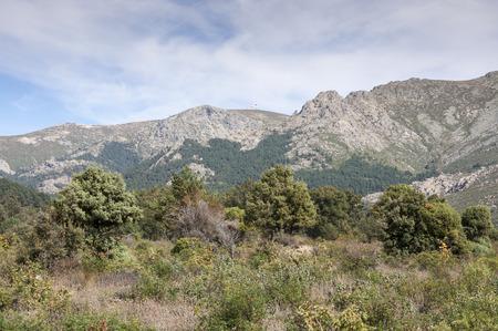 mediterranean forest: Mediterranean forest in La Barranca Valley, in Guadarrama Mountains, Madrid, Spain. In the background, the peaks of Alto de Guarramillas (Bola del Mundo)