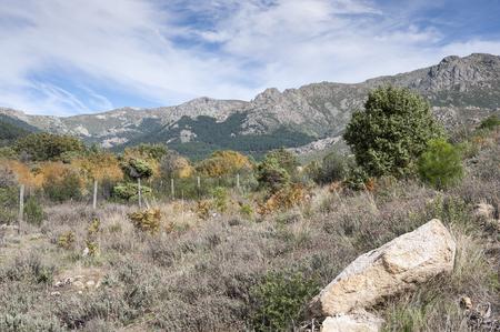 mediterranean forest: Mediterranean forest in La Barranca Valley, in Guadarrama Mountains, Madrid, Spain. In the background, the peaks of La Maliciosa Alto de Guarramillas (Bola del Mundo)
