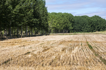 cropland: Stubble fields and poplar groves in an irrigated agricultural landscape in the plain of the River Esla, in Leon Province, Spain