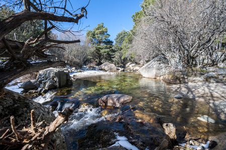 scots pine: The River Manzanares along its course through La Pedriza, in Guadarrama Mountains National Park, Madrid, Spain