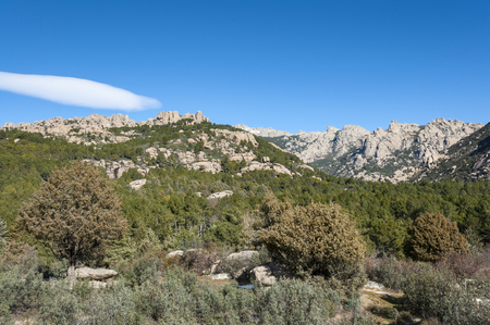 scots pine: Views of La Pedriza from Canto Cochino, in Guadarrama Mountains National Park, Madrid, Spain. In the background can be seen The Cancho de los Muertos (Peak of the deads), El Pajaro (Bird Peak), Las Buitreras (Vulture Peak) and Sirio Peak