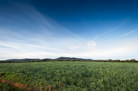 the arable land: Olive groves and barley fields in an agricultural landscape in La Mancha, Ciudad Real Province, Spain. In the background can be seen the Toledo Mountains