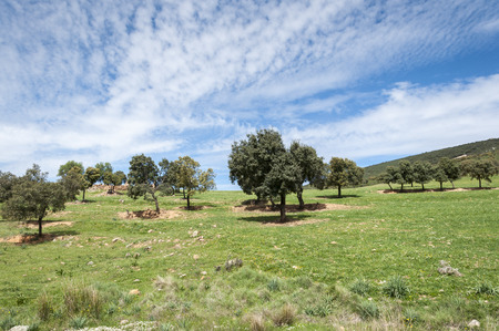 Mediterranean shrublands and flowering fallows in Toledo Mountains, Ciudad Real Province, Spain Stock Photo